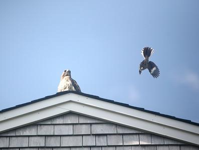 Hawk Attack 2