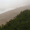 Fog and Rain at Nauset Beach