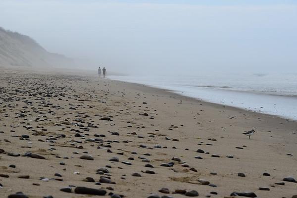Cue the Fog