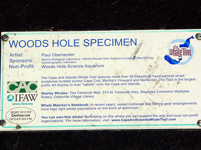 Woods Hole Specimen, Woods Hole