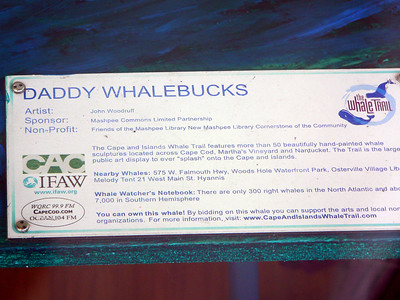 Daddy Whalebucks, Mashpee