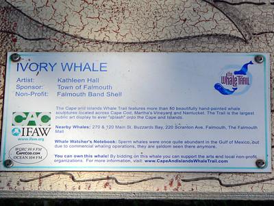 Ivory Whale, Falmouth