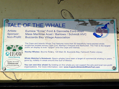 Tale of the Whale, Buzzards Bay
