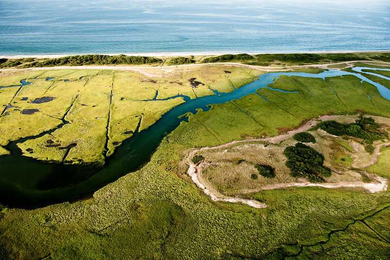 Tidal marsh, July.