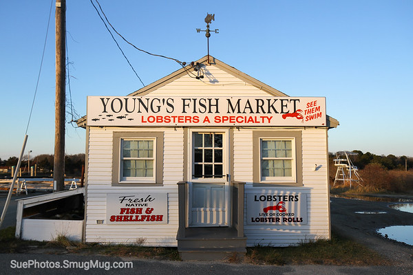 Young's Fish Market, Orleans, Cape Cod, Massachusetts, USA