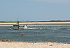 Sea gulls following a fishing boat.