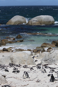 Boulder Beach - home of the African penguin.