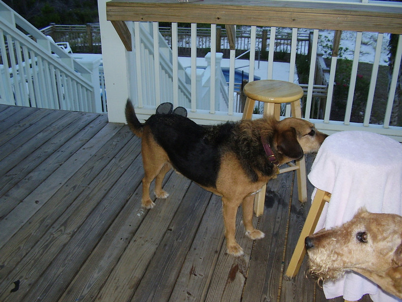 Hunter and Dudley on the deck.