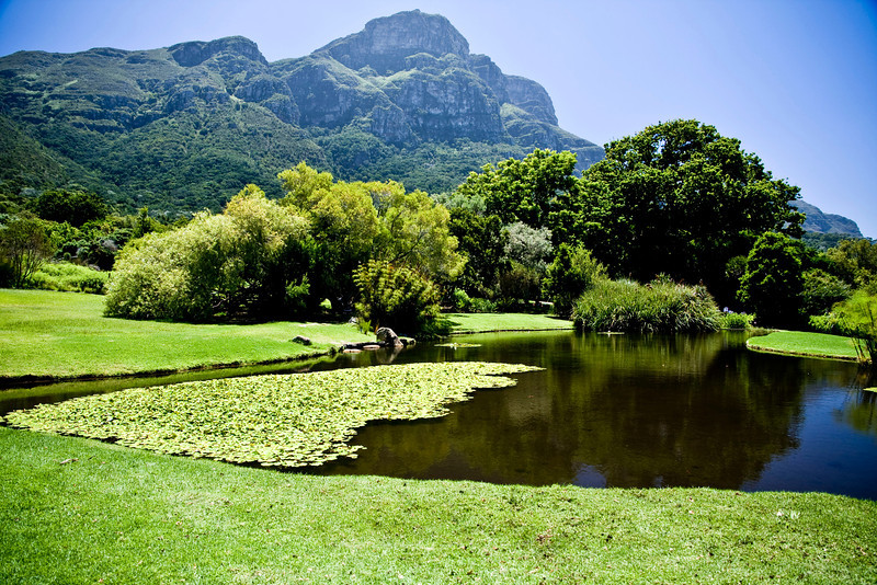 Kirstenbosch Botanical Garden.