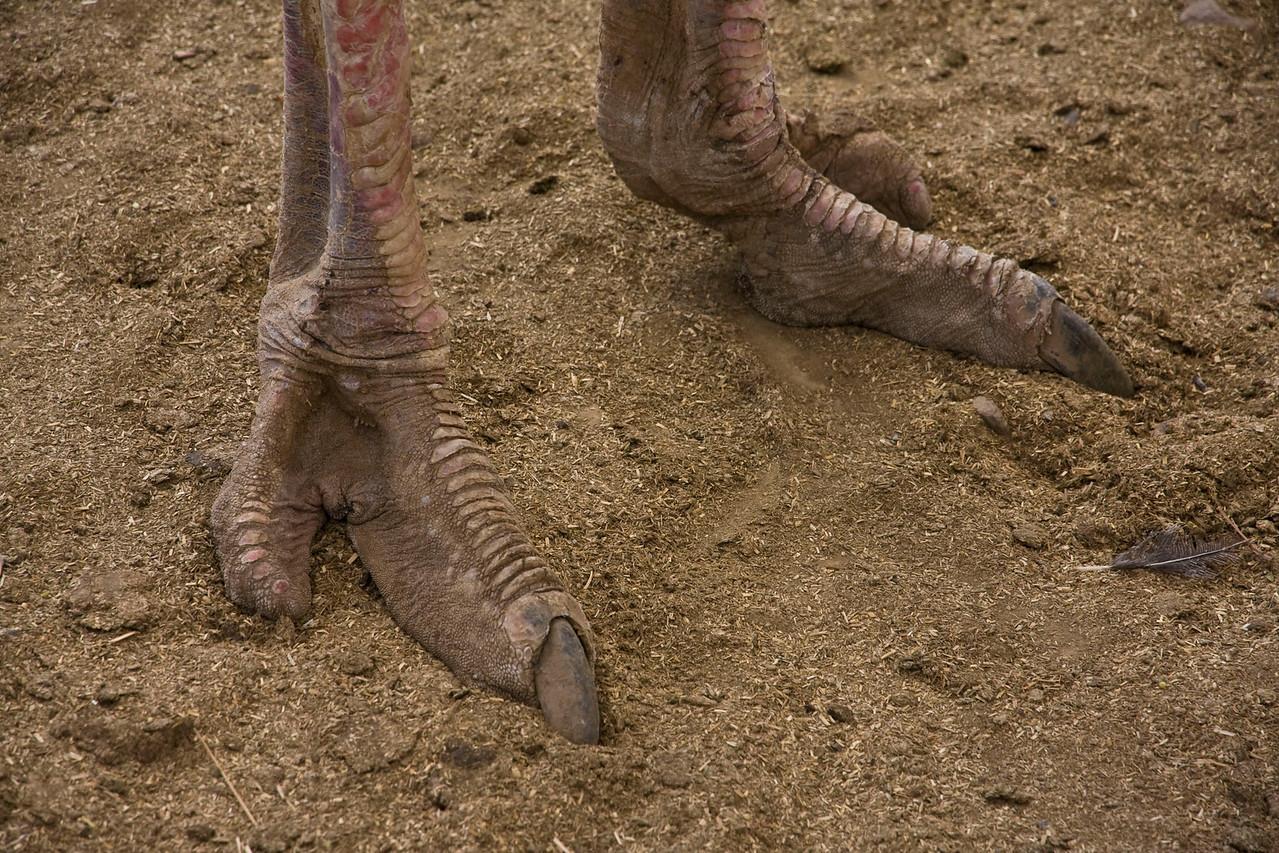 Ostrich feet.