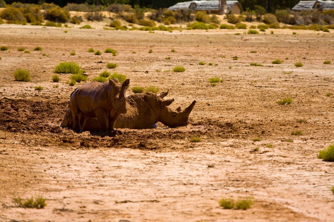 Baby rhino!