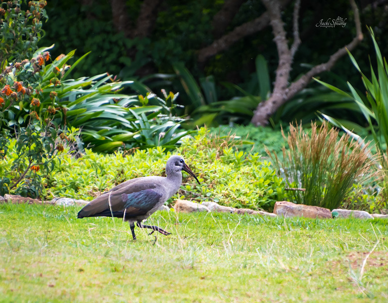 20190514-320 Cape Town Table Mtn, Gardens and Bo Koop homes-Edit