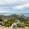 20190514-76 Cape Town Table Mtn, Vegetation growing on top of the mountain
