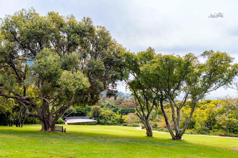20190514-621 Cape Town Table Mtn, Gardens and Bo Koop homes-Edit topaz 1