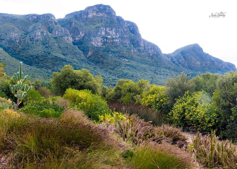 20190514-238 Cape Town Table Mtn, Gardens and Bo Koop homes-Edit