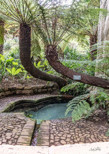 20190514-485 Cape Town Table Mtn, Gardens and Bo Koop homes-Edit