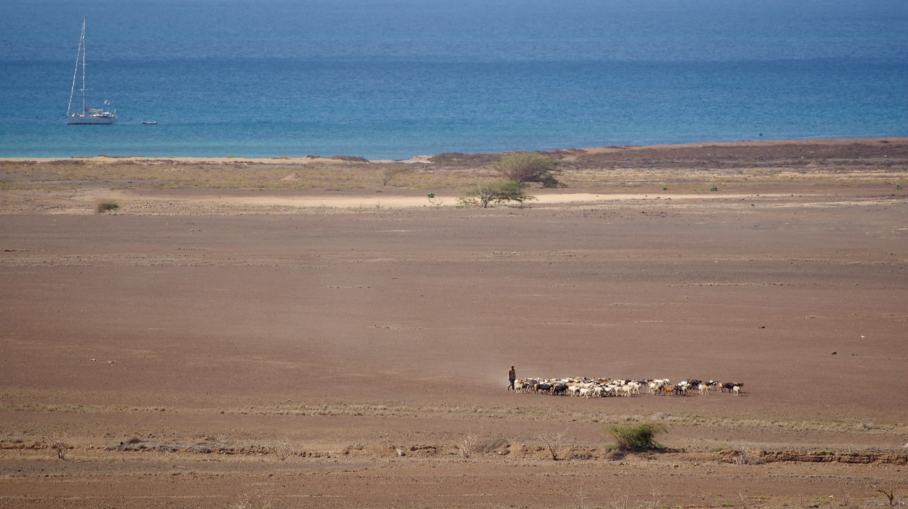 East coast of Sal overlooking the sea from a high vantage point. Shepherd and livestock = great composition :-)