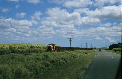 Into the cane fields of the north.