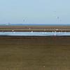 gulls, tidal flats
