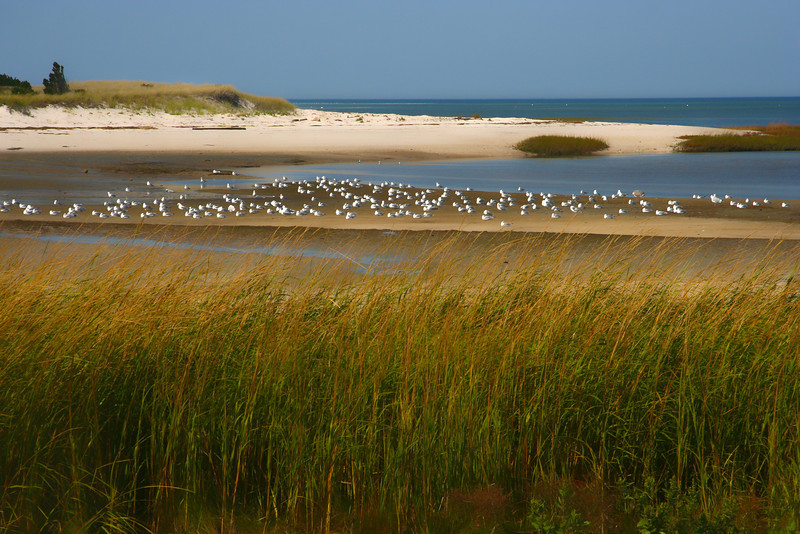 Gulls, Paines Creek