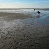 collecting stuff, tidal flats