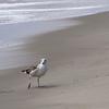 DSC03638-3-3x2-smooth-sand-seagull-sea