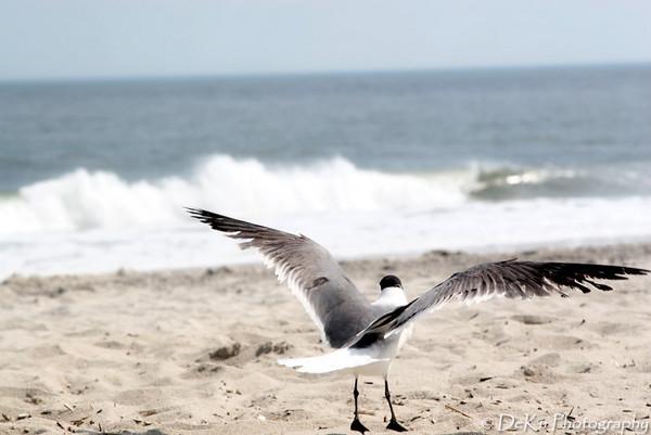 Beach-Day1(web)_0056 DF3