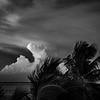Palm Clouds Sunset 1 B&W