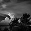 Palm Clouds Sunset 1 B&W