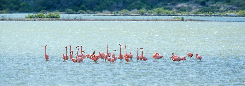 Most of the flamingos had already migrated out, but I was so excited that there were a few left!