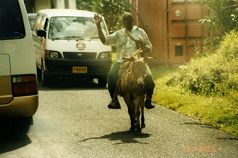 Grenada local riding his burro down the highway.