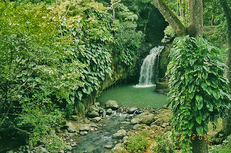 Part of Annandale Falls, Grenada.  A lush tropical waterfall tucked into the upper hills of Grenada.