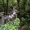 stream near La Coca falls