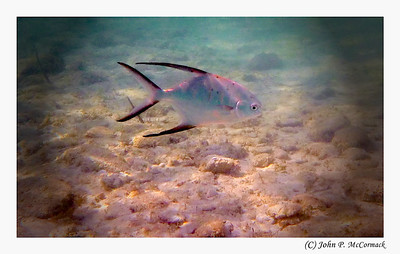 Panasonic TS20 Underwater, Bahamas, Coco Cay, Monarch of the Seas, Cruise October 2012,