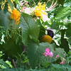 Bananaquit yellow-bellied bird