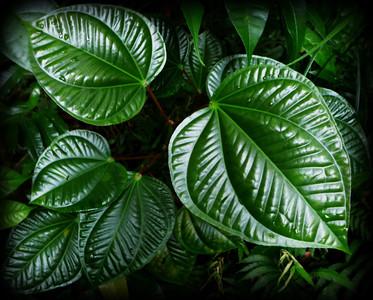 lush foliage in the jungle of Dominica