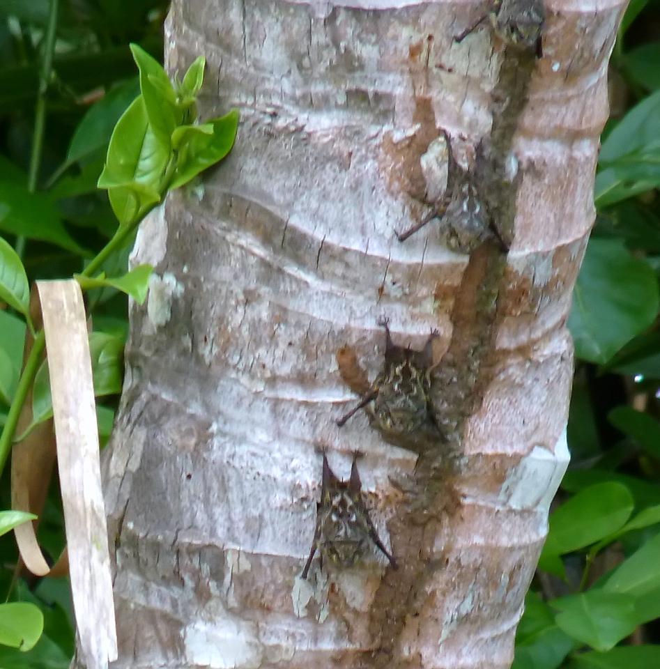 Tiny bats sleeping on a tree trunk