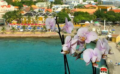orchids over Bonaire