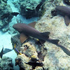 small nurse sharks (?)