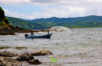 Fishermen Casting their nets near Belle Garden, Tobago, WI