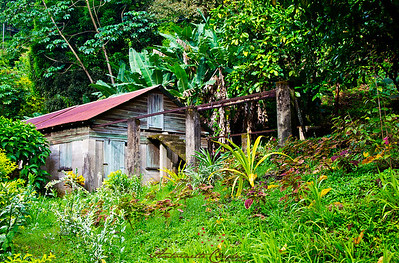 Old Cocoa House - Charlottesville - Tobago