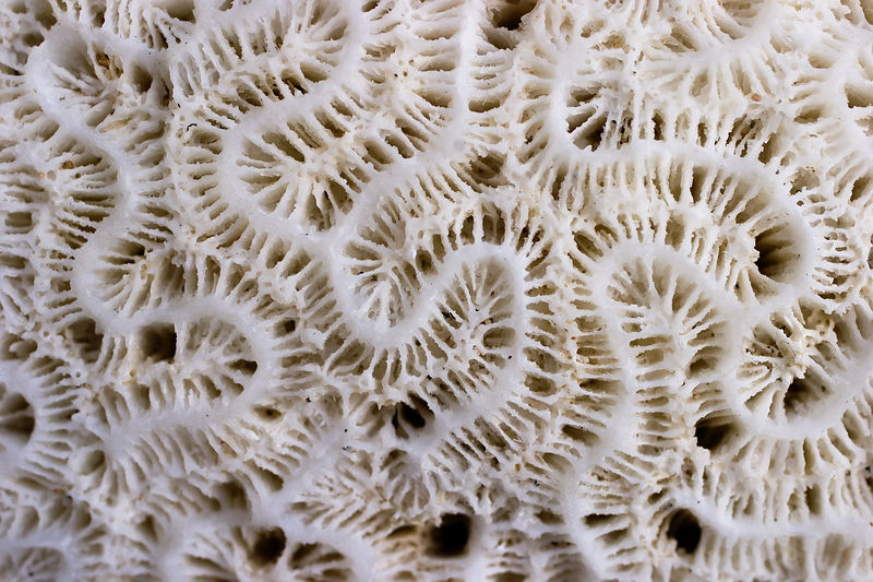 Coral patterns<br /> Annaly Bay, St. Croix, U.S. Virgin Islands