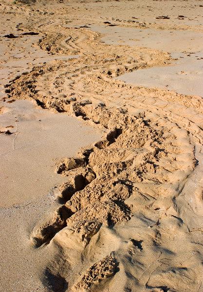 Leatherback Sea Turtle Tracks at Sunrise. <br /> Playa Brava, Culebra Island, Puerto Rico.
