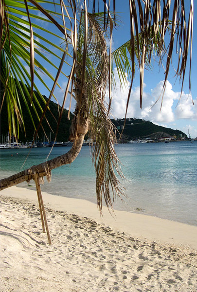 Palm tree with help on beach with sugar sand and aqua waters - St. Maarten - Nether Antillies