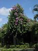 The Gardens, Halcyon Beach, St Lucia