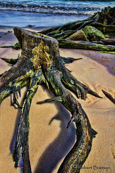 Stump by the Sea