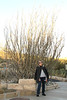 My mom in front of an ocotillo, for scale.