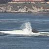 Surf off Carmel