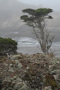 Cypress sentinel.