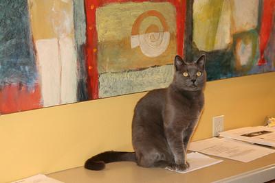 Arthur, Chief Feline Officer (CFO), MacArthur Place, Sonoma, CA